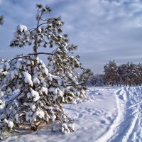 Мороз и солнце :: Александр Кафтанов