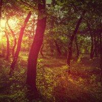 В лесу :: Nerses Davtyan