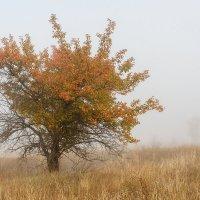 Одинокое дерево на склоне холма :: Дмитрий Кузнецов