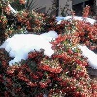 Нежданный снегопад. :: Жанна Викторовна