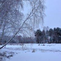 Мелодия зимнего леса :: Miola