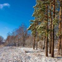 На лесной опушке :: Любовь Потеряхина