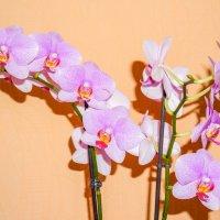 Орхидея. :: Elena Izotova