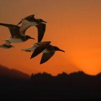 Чайки :: Павел Байдалов