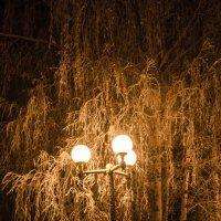 морозный вечер... :: Алексей Бортновский