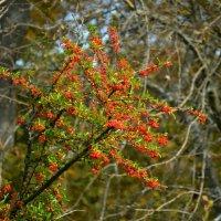 Осенью :: Marina Timoveewa