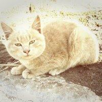 рыжий котэ :: Юлия Закопайло