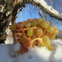 Мороз и солнце. :: nadyasilyuk Вознюк