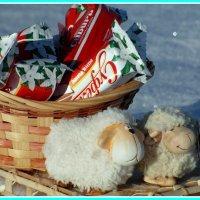 Год овцы уже в пути. :: nadyasilyuk Вознюк
