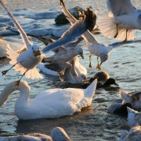 Зимующие птицы :: Елена Даньшина