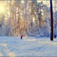 лыжник в красном... :: Галина Филоросс