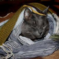 Сладкий  сон  в  пончо.......... :: Валерия  Полещикова