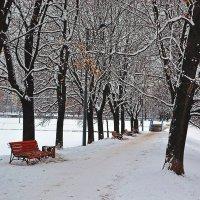 Зимняя аллея :: Анатолий Цыганок