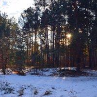 Утро в лесу :: Ростислав