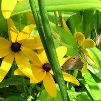 Жизнь в желтых цветах...5 :: Natali