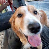 Чем больше узнаю людей, тем больше нравятся собаки! :: Наталья Пономаренко