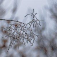Зимние украшения :: Римма Волченко