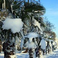 Снежные пальмы :: Alexander