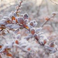 Мороз и солнце... :: Bosanat