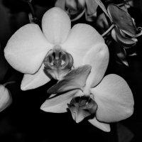 В черно-белом цвете :: Viktoria Tkach