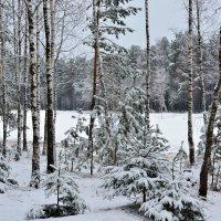 По берегам замерзающих рек снег, снег, снег... :: Miola