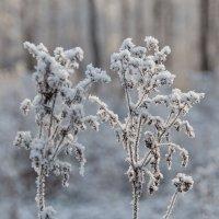 Зимние цветы :: Нина Агаева