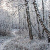 Тропинка в зимнем лесу :: Нина Агаева
