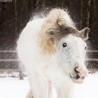 Коник в снегу) :: Ольга Милованова