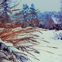 вот и снег упал :: Сергей