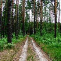 В лес по грибы  ... :: Damir Si