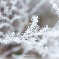 Холод :: Сергей Бутусов