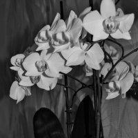 В черно-белом цвете.4 :: Viktoria Tkach