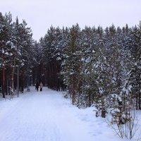 Прогулка в лесопарке :: Виктор Коршунов