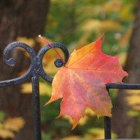 Ты мне приснись, рыжий лист кленовый... :: Ната Волга