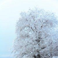 Зимы причудливые узоры :: Дмитрий Скубаков