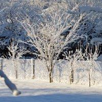 Зимушка-зима4 :: Валентина