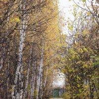 Дорога  в осень! :: Сеня Полевской