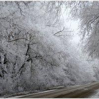 Зимнее утро,туман и мороз... :: Тамара (st.tamara)