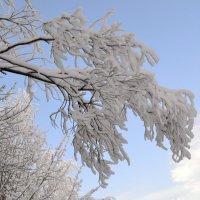 Зима, зима, кругом зима... :: Ольга