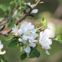 Весна :: Сергей Грымов