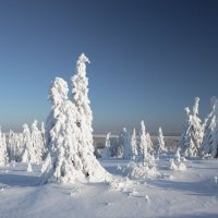 Зима в лесу :: Анатолий