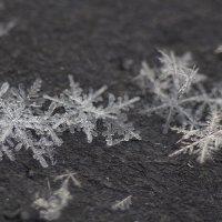 Поимка снежинок на черный лист бумаги! :)))) :: Павел Сухоребриков