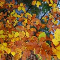 Красочная осень. :: Антонина Гугаева