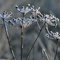 Зимний букет :: Нина Синица