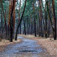 Зимний лес :: Владимир Бровко