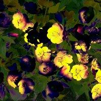 Необычные цвета в природе ! :: Damir Si