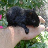 Мой гость - черный бельчонок :: Юрий Поляков