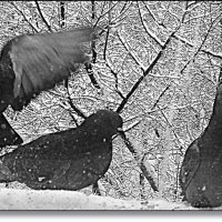 Window Winter :: muh5257