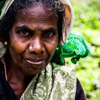Ланкийсякая сборщица чая :: Svetlana Kas