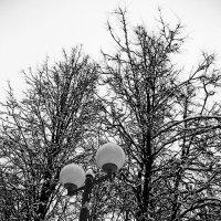 Зимняя аллея :: Лариса Корженевская
